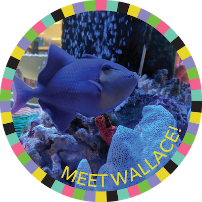 Meet Wallace!  badge image