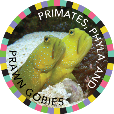 Primates, Phyla, and Prawn Gobies image