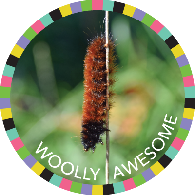 Woolly Awesome image